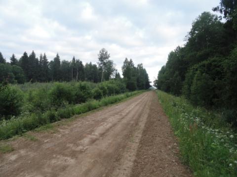 Par Bamu iesauktais meža ceļš. Foto: F.Bobinskis, 2017.
