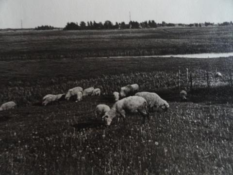 Skats no Sviesta kalna uz Dubnas upi 20.gs. vidū. Caru ģimenes arhīvs.