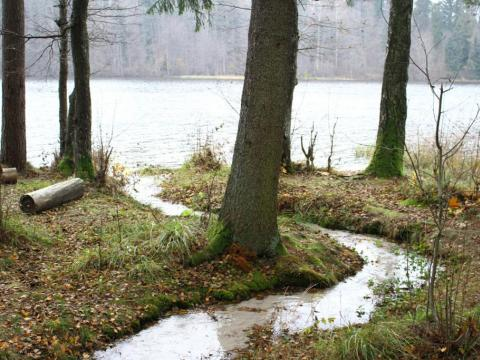 Briņķu silavota strautiņa ieteka Vaidavas ezerā. Vaidavas pagasts. 2019.g. 25.oktobris. V.Grīviņa foto.